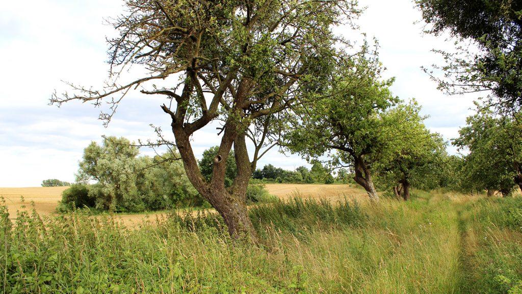 Bäume und ihre vielfältigen Nutzungsmöglichkeiten