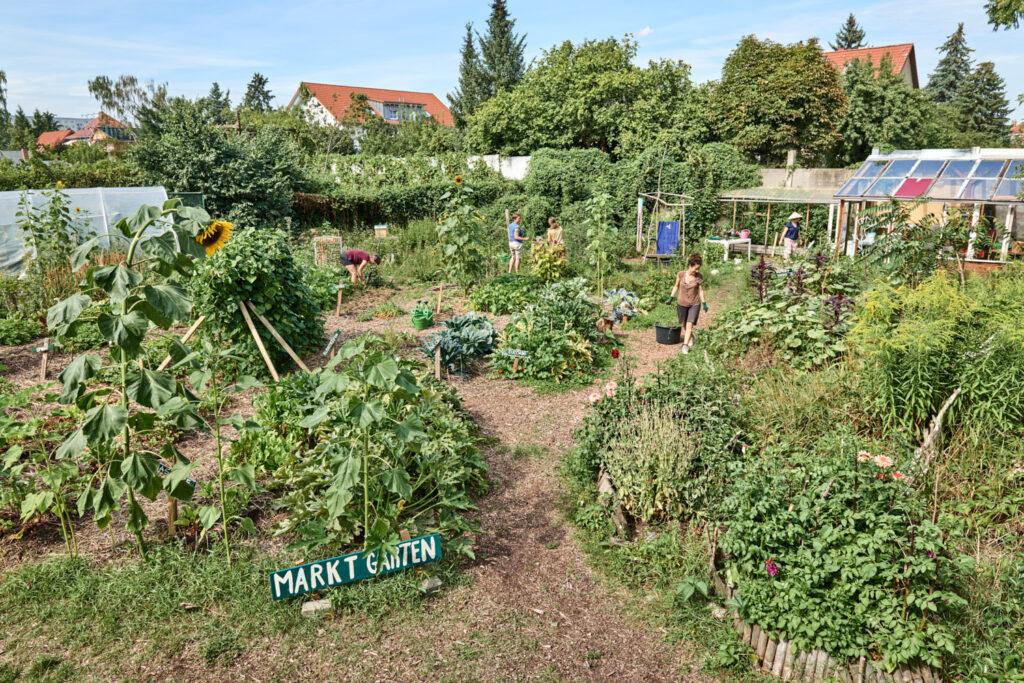 Offener Gartentag im Juli