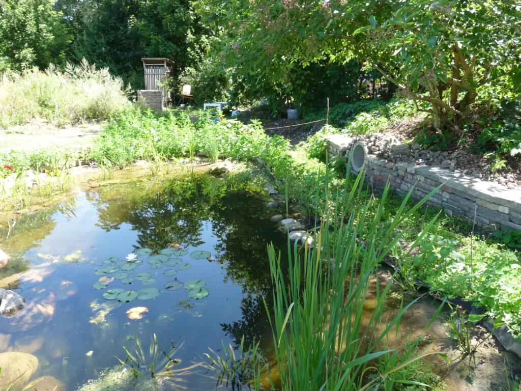 Unsere Teichlandschaft im Spätsommer-Herbst 2018