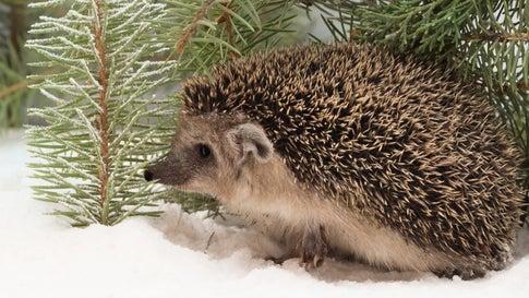 Winterlicher Gartenrundgang und Weihnachtsfeierei