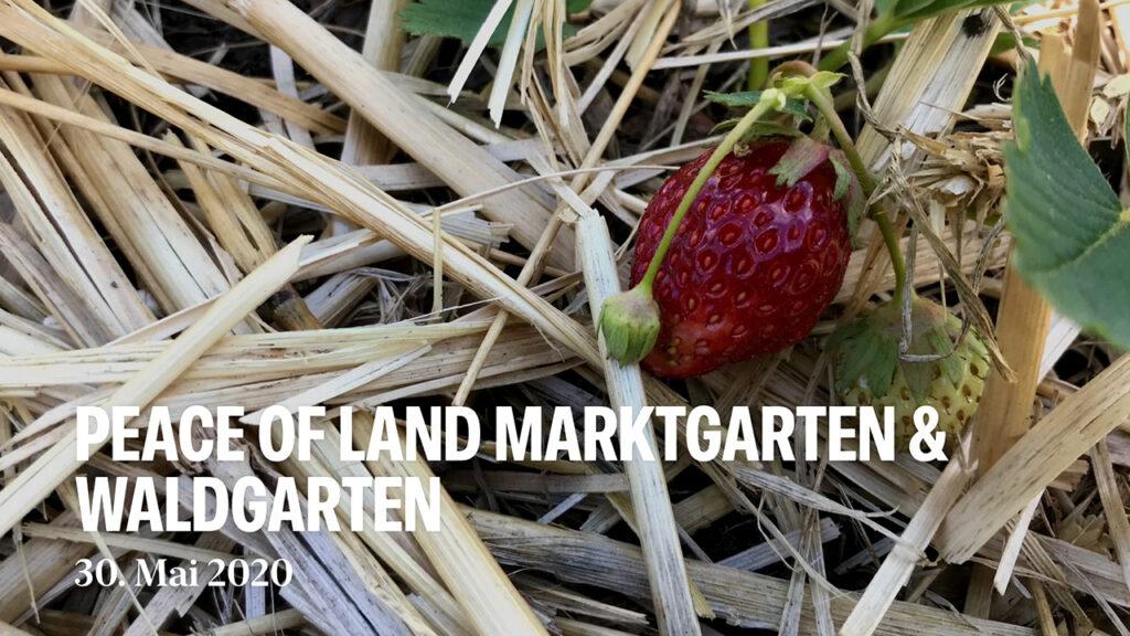 Marktgarten und Waldgarten im Mai 2020