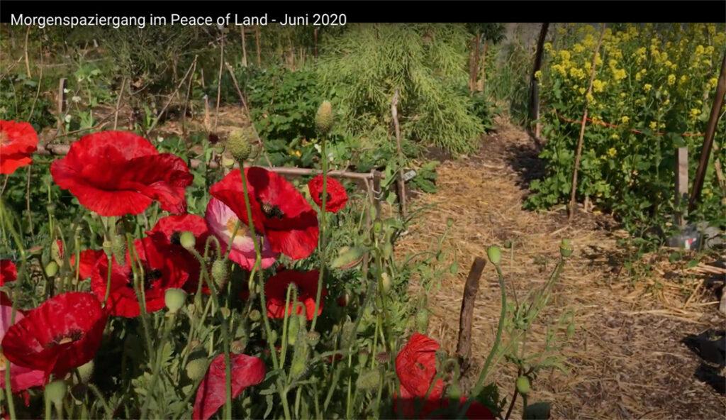 Gartenrundgang – Juni 2020