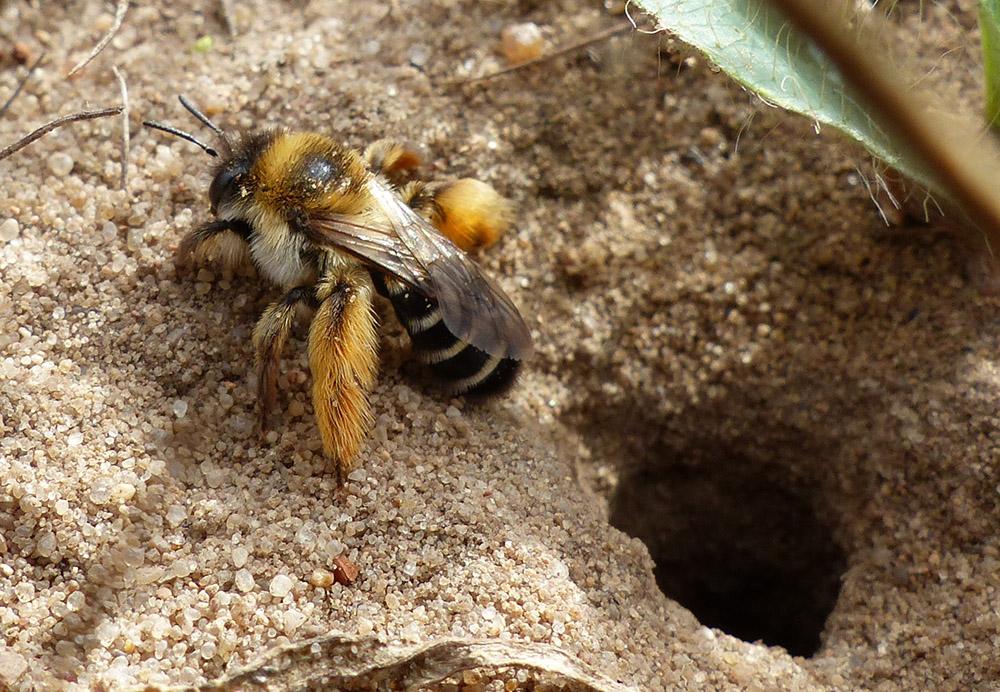 Bürgerwissenschaft und Bienen 2020