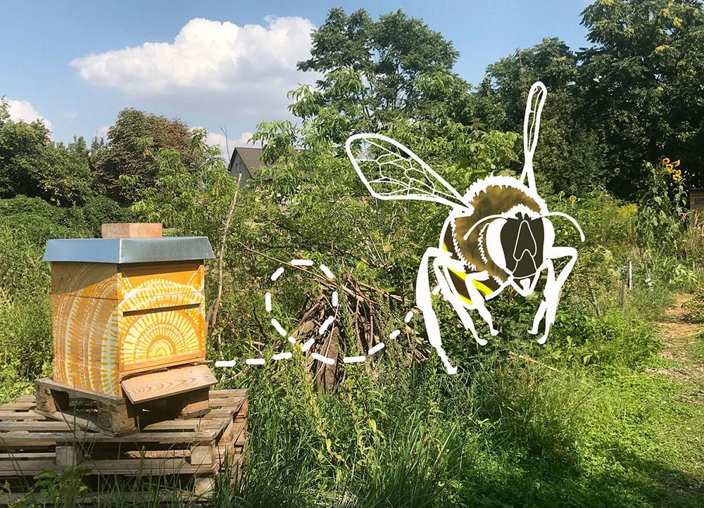 Das Summen der Bienen – Führung für Kinder, Familien & Solitärwesen
