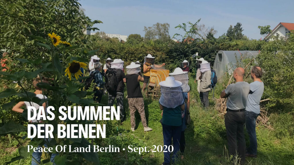 Bienenführungen im Peace of Land Berlin